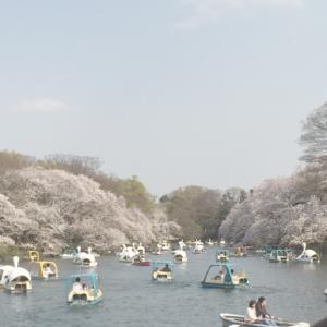 吉祥寺 井の頭公園 ハナヒヨ hanahiyo